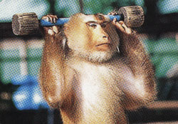 monkey_show_and_training_center_pattaya_beach - The enemy getting ready for Mortal Kombat - Anonymous Diary Blog