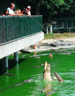 Million Years Stone Park and Crocodile Farm Pattaya excursion.